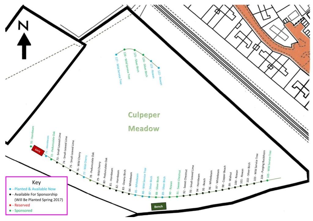 Culpeper Meadow New Trees