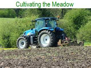 Cultivating the Meadow