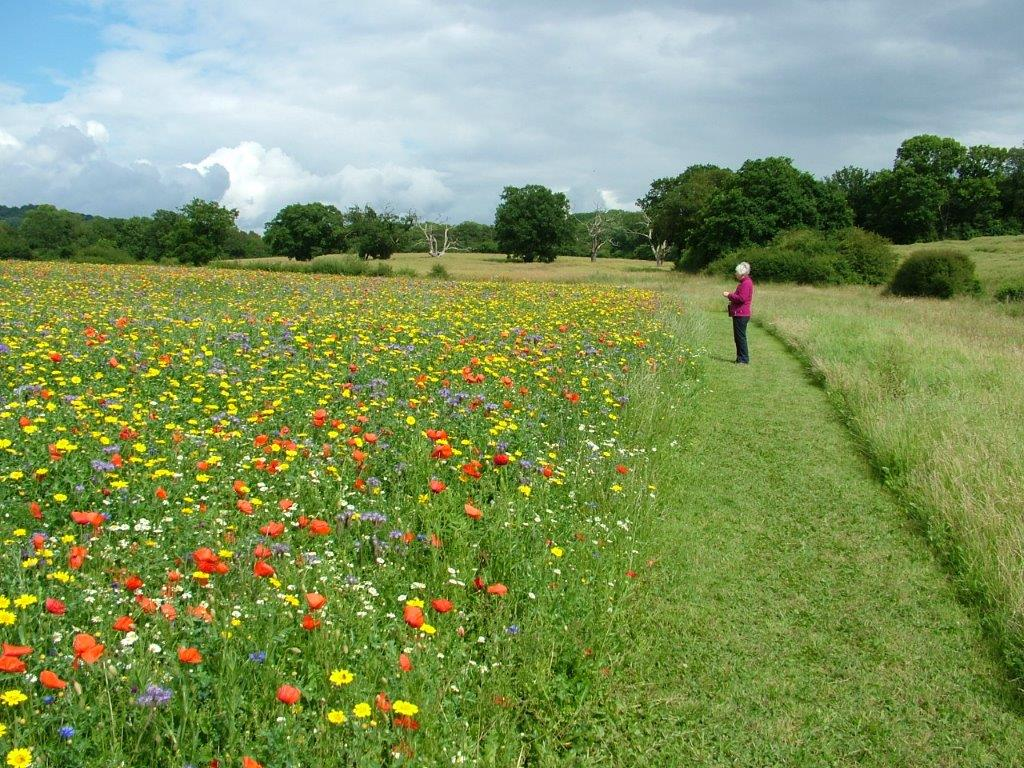 Our Flower Meadow. Photo: Peter Lee