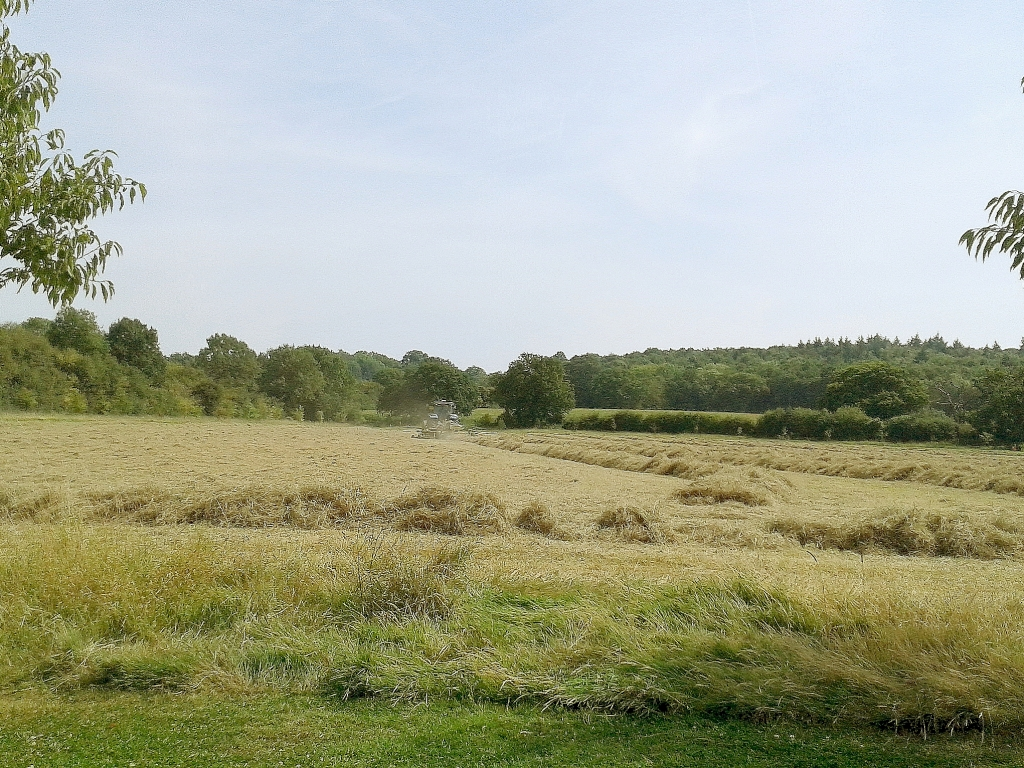 Culpeper Meadow Hay Making