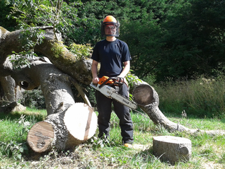 Jack Wilson cutting up the fallen Ash tree