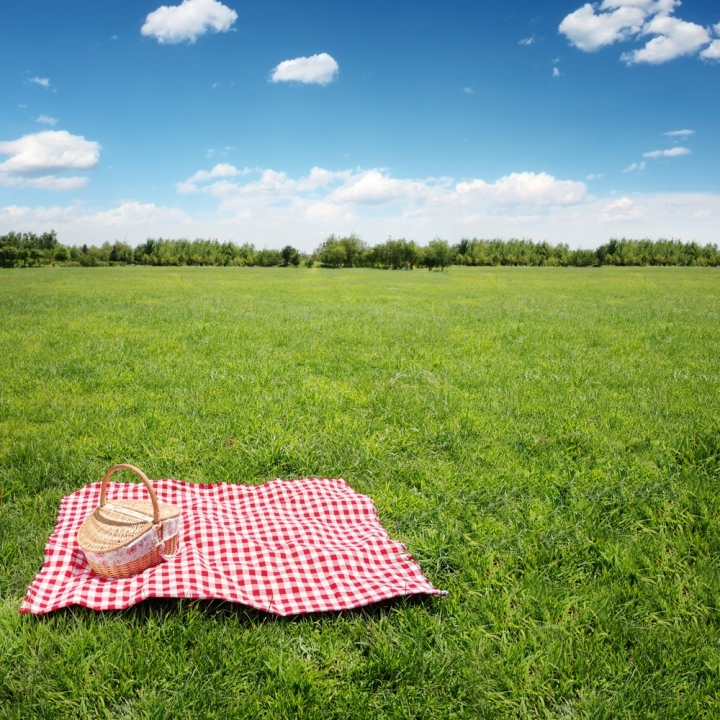Picnic in the Meadows