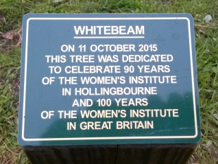Celebration tree unveiling