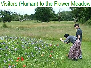 Visitors (Human) to the Flower Meadow - July 2012